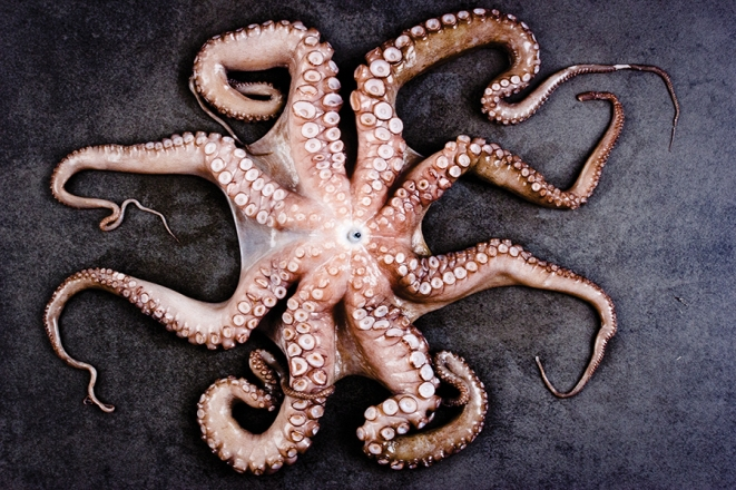 Octopus / Cookbook of Apicius / 1st century CE, Italy (picture in Smaak! Een geschiedenis in 120 recepten)