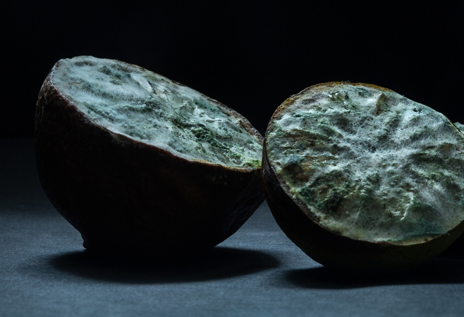Citrus fruits including limes were brought to the Americas from Eastern Asia. During these voyages many European seafarers perished from scurvy before realizing in the 18th century that these exotic fruits held the cure.
