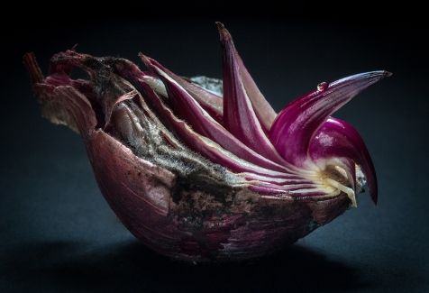 The onion is a rare example of a food that was known and appreciated on both continents, by Native Americans and Europeans, before they were from Old World to New during the Columbian Exchange.